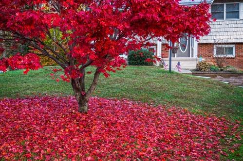 Medford Tree Trimming